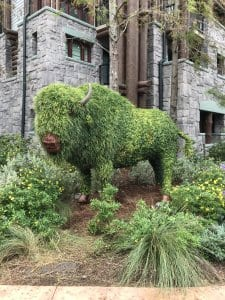 Big Buffalo at the Wilderness Lodge at WDW